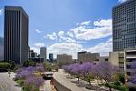 20100523 Beautiful Flower Street