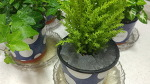 집을 오랫동안 비울 때, 화분 관리 방법은?
