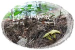 불암산 야생버섯, 2014 여름