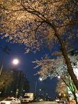 용문동 맛집 벚꽃만발한 봄날! 대패삼겹살 1인분 2천원 과 쭈꾸미구이 8천원...