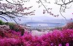 부천 원미산 진달래축제가 열리는 진달래동산에서 꽃피는 봄을 만끽하자