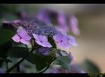 태종사의 수국과 나리꽃