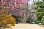 부산 유엔기념공원 홍매화, 도심 속에서 만나는 봄의 향기