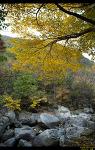 원동 자연휴양림의 가을