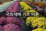 국화재배 기초이론 (보령농업대학 2015년 4월 29일 강의)