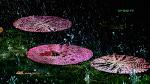 시흥 연꽃테마파크