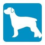 반려동물 인도 뭄바이 파랜색 강아지(Blue Dog)