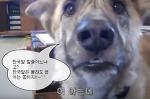 영어 유창하게 말하는 개.. 엽기웃긴동물동영상
