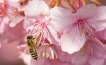 봄, 알레르기 대처법