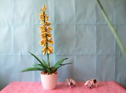 알로에 베라 (Aloe Vera) 종이접기 동영상입니다. 알로에 베라에는 참 이쁜 꽃이 핍니다.
