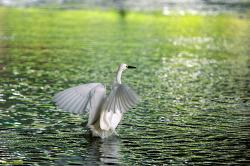 홍제천에서 찍었던 나머지 동물사진들...