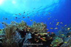 Dive Raja Ampat 4, Indonesia