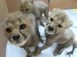 2015 에버랜드 동물원 5대 뉴스