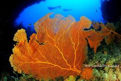 siaes tunnel, Palau