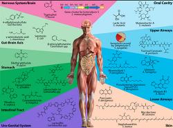 한국의과학연구원 마이크로바이옴 NGS GMA Microbiome 장온균 작용