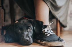 2017년 강아지 사진작가들의 감동 주는 15편의 수상작들 15 Heartwarming Winners From Dog Photographer Of The Year 2017