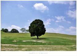 올림픽공원 나홀로나무의 평화로운 풍경