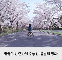 봄에 보기 좋은 영화 추천! 벚꽃 흩날리는 영화들