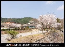 벚꽃명소 춘천 가볼만한 춘천댐 벚꽃길 벚꽃엔딩은 니콘 D5500 DSLR 과 함께