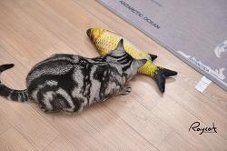 고양이에게 생선을 맡기면 이렇게 됩니다.