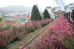 붉게 물든 가을 꽃 축제! 에버랜드 '레드 플라워 페스티벌' 구석구석~