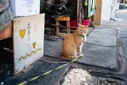 거리의 고양이 13/Cats in the street 13