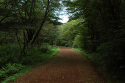제주도 여행 추천코스 야생사슴도 있는 사려니숲길