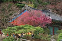 봉은사의 봄