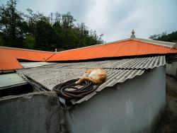 거리의 고양이 5-슬레이트 지붕 위의 고양이/Cats in the street 5-Cats on the slate roofs