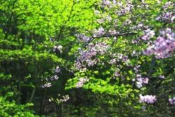 산빛, 봄물 들다