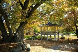 환상적인 가을빛, '무주 수락마을' 마을숲