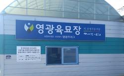 김장배추파종시기 9월 배추농사 시작