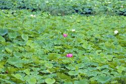 [20170817]의왕시, 왕송호수 연꽃습지 생물다양성 탐사