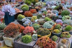 공기정화식물 베란다 공기를 깨끗하게 하다