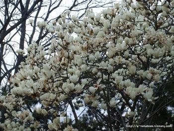 길가에 핀 봄꽃을 보며 재미로 풀어 보는 꽃말 5가지.