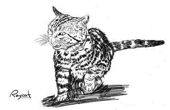 사람은 이해하기 힘든 고양이의 행동 4가지