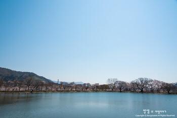 벚꽃엔딩, 진해 내수면 환경생태공원 행복한 봄날의 산책