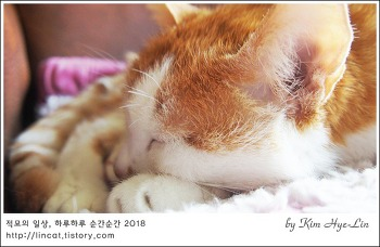 [적묘의 고양이]19살 묘르신, 꼬리가 무겁다,노묘,세월의 무게만큼
