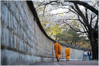 경주 대릉원의 봄
