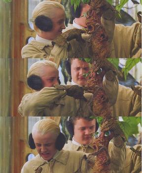 영화 해리포터 속 '사람 닮은 식물 맨드레이크'가 실존한다