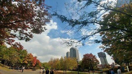 가을이 내려앉은 여의도 공원