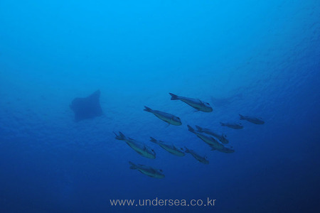 Indonesia Diving
