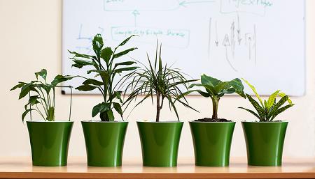 사무실 식물 추천 - 화분 하나 놓으니 봄이 왔어요!