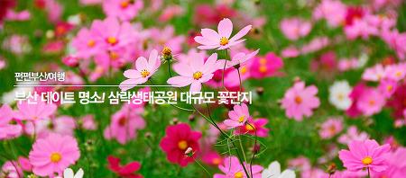 부산 데이트명소 삼락생태공원 대규모 꽃단지!