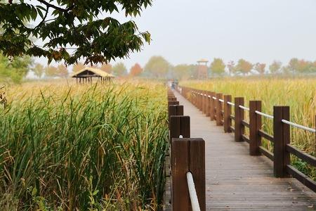 10월 출사지 추천! 갈대 보기 좋은 국내 가을여행지 모음