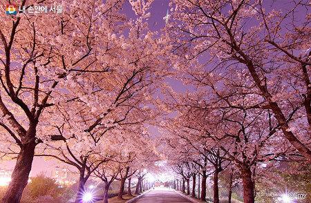 설레이는 서울 봄꽃길