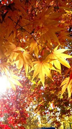 가을이 아닌가?