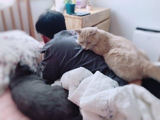 고양이야 아빠랑 친해지길 바라