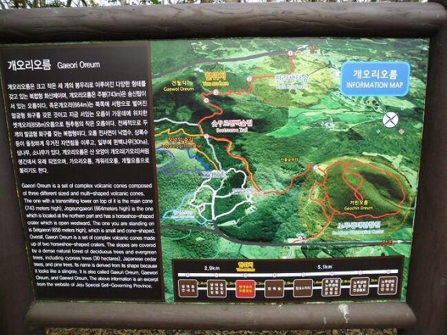 숫모르 숲길 - 편백나무림 3