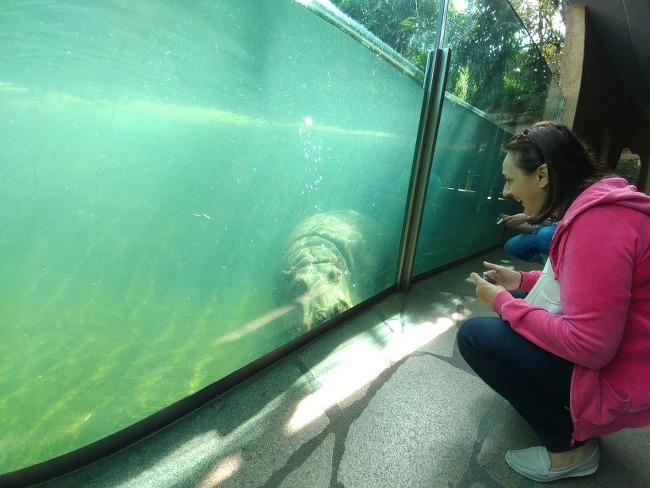 베를린 12, 이제껏 몰랐던 하마의 매력, 베를린 동물원